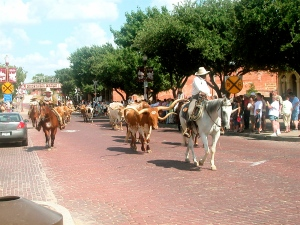 A typical day at Ft. Worth Stockyards